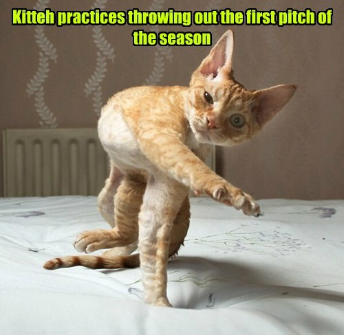 Kitteh practices throwing out the first pitch of the season