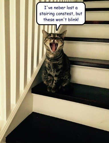 I've neber lost a stairing constest, but these won't blink!