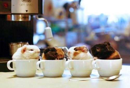 coffee,cups
