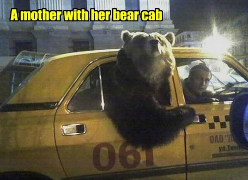 A mother with her bear cab