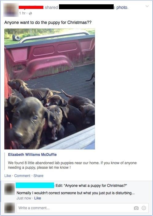 dogs,christmas,for sale,puppy,failbook