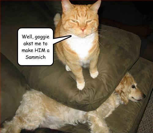tabby,cocker spaniel,dogs,Cats