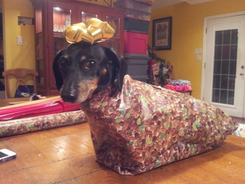 christmas,dogs,wrapping