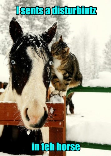 the force,Cats,horse