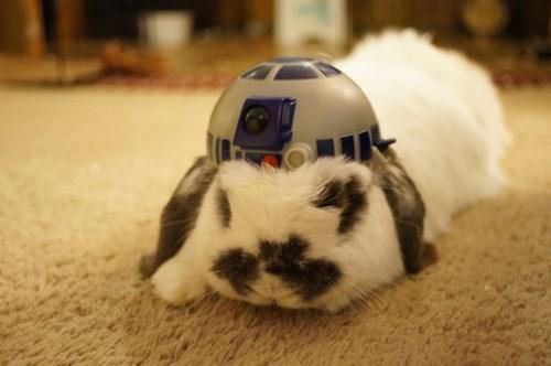 r2d2,star wars,happy bunday,cute,bunny