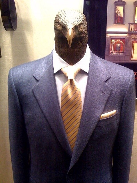 eagles,freedom,suits