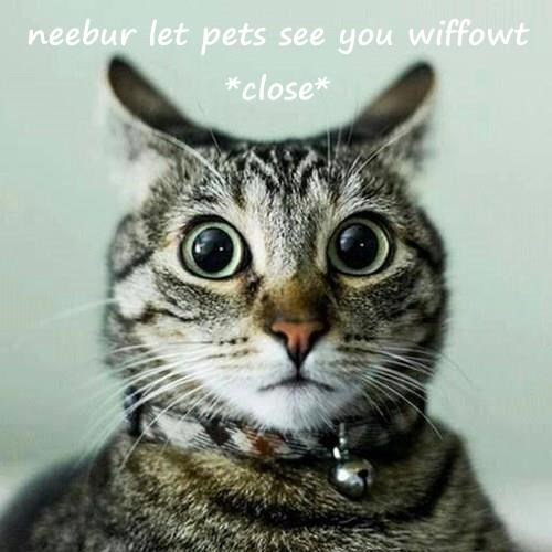neebur let pets see you wiffowt *close*