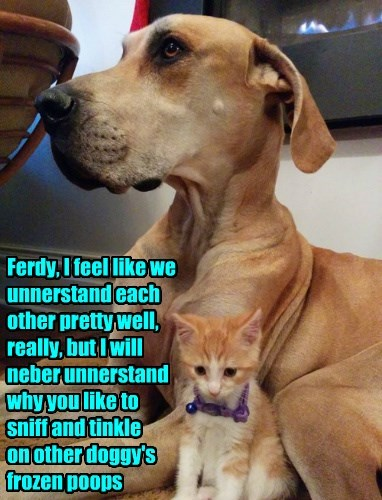 dogs,confused,why,Cats