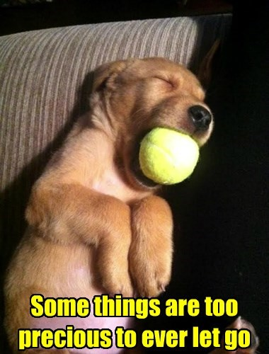 dogs,ball,love