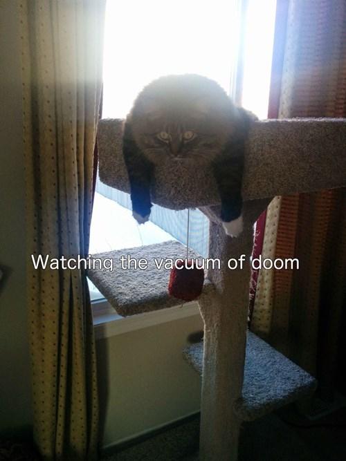 terror,The End,Cats,vacuum