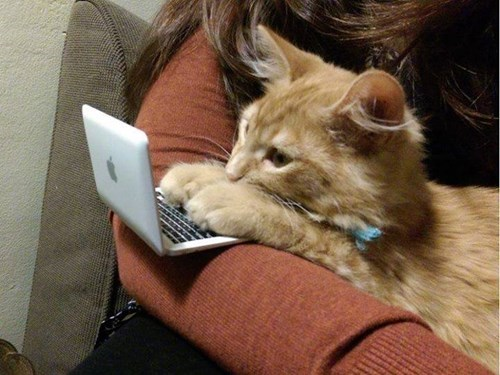technology,kitten,cute,catlaptop