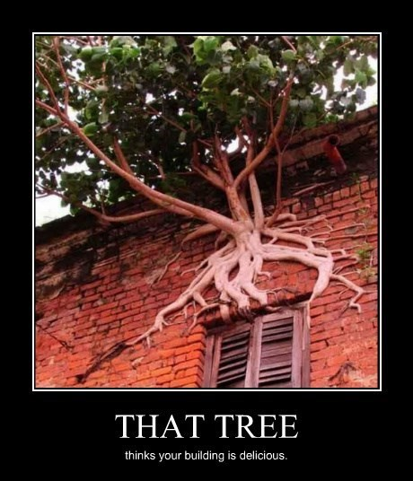 One Industrious Tree