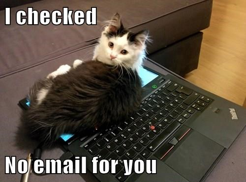 I checked  No email for you