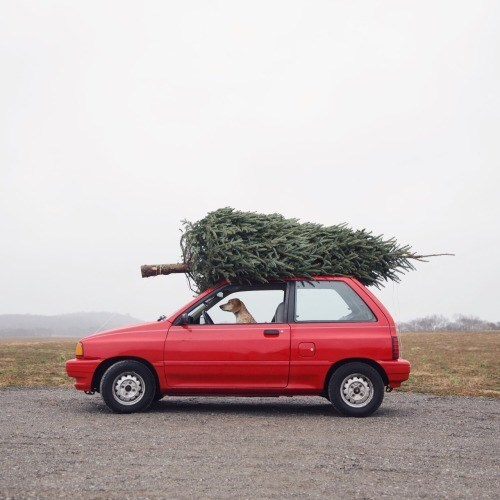 I'll Drive Us Back and Have The Tree In One Piece