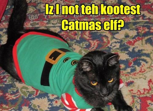 Iz I not teh kootest Catmas elf?