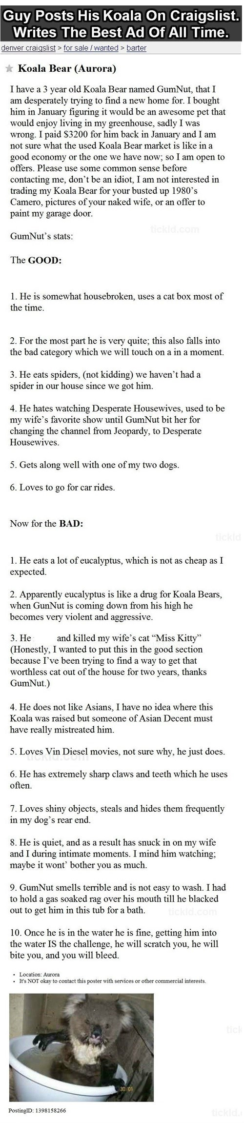 A Man Selling His Koala Makes the Best Craigslist Post Ever