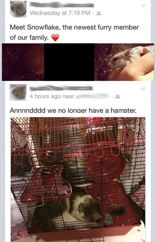 RIP, Snowflake, the Very Unfortunate Hamster