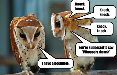 knock knock,joke,owls