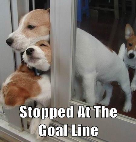 dogs,jack russel terrier,football