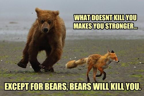 bears,fox,advice