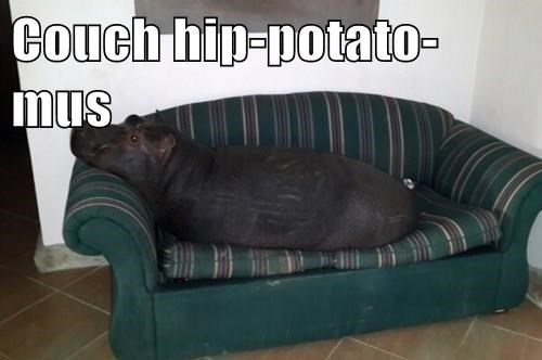 pun,couch,hippo