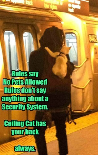 Rules say  No Pets Allowed  Rules don't say anything about a Security System.  Ceiling Cat has your back   always.