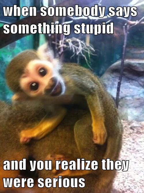 wtf,i cant even,monkey