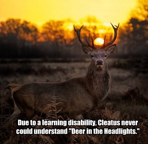 "Due to a learning disability, Cleatus never could understand ""Deer in the Headlights."""