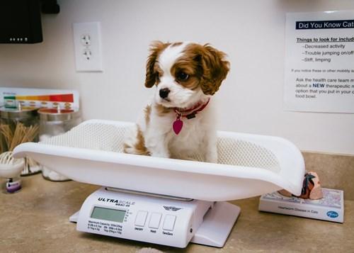 dogs,scale,puppy,cute,vet