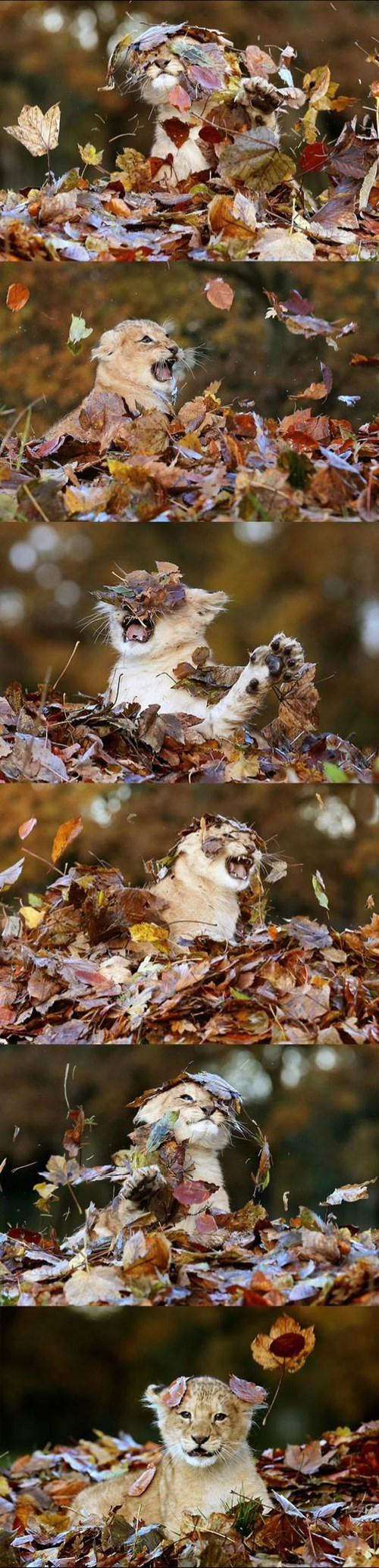 Just a Kitty Playing in the Leaves