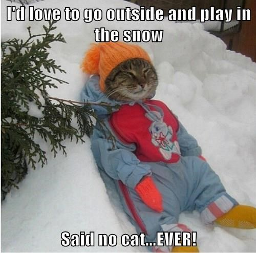 I'd love to go outside and play in the snow  Said no cat...EVER!