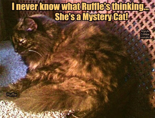 I never know what Ruffle's thinking...
