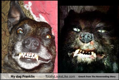 My dog Franklin Totally Looks Like Gmork from The Neverending Story