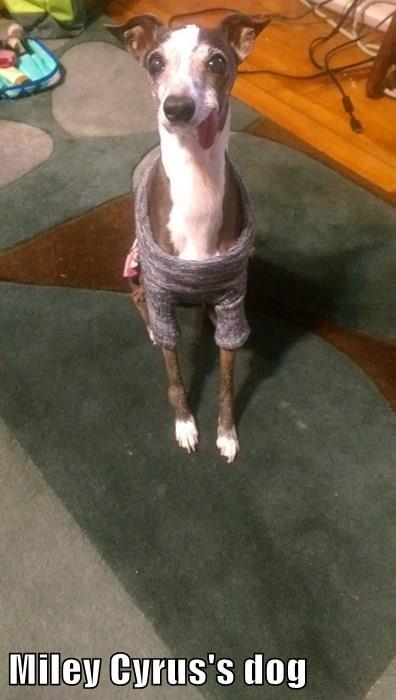 Miley Cyrus's dog