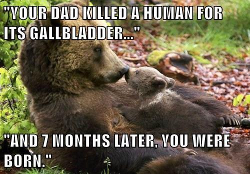 baby animals,bears,cub,story
