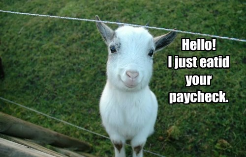 baby animals,FRIDAY,goats,paycheck