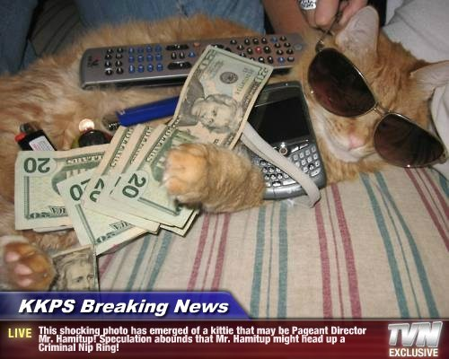 KKPS Breaking News - This shocking photo has emerged of a kittie that may be Pageant Director Mr. Hamitup! Speculation abounds that Mr. Hamitup might head up a Criminal Nip Ring!