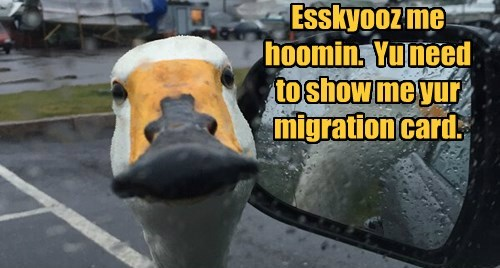 migration,human,goose