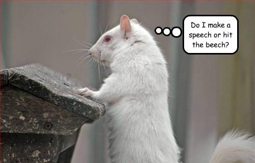 Do I make a speech or hit the beech?