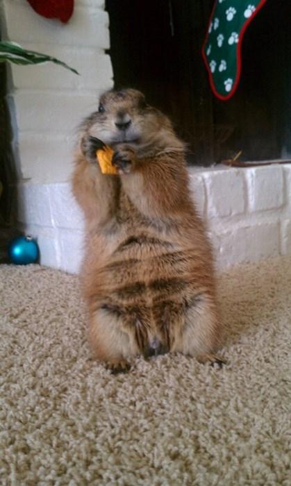 An Orange Cheez-It, For Me?