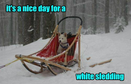 dogs,sled,snow
