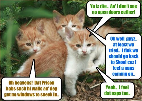 Dese Ittie Bitties reconnoiter teh outside ob teh Last Chance Prison to see if dey can break out Mr. Hamitup!