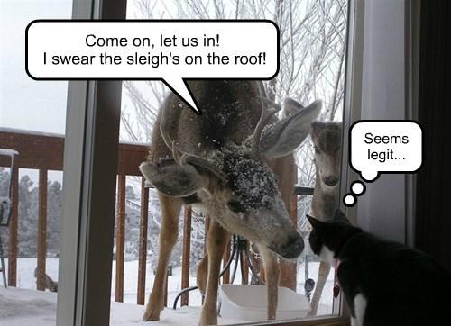 Door-to-door deer delinquents.
