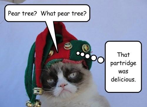 Partridge in a Grumpy Cat