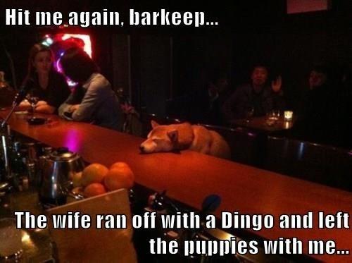 dogs,bad day,bartender,shiba inu