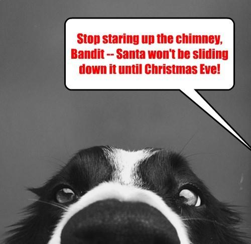 christmas,dogs,santa,bacon