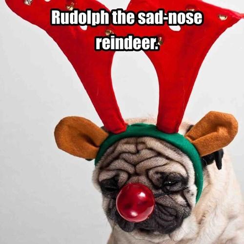 Boris the pug as a reindeer