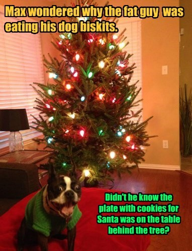 Didn't he know the plate with cookies for Santa was on the table behind the tree?