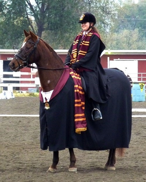 cosplay,Harry Potter,horse,gryffindor