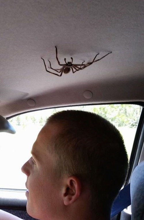 spiders,nope